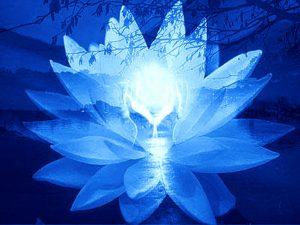 lotus2244