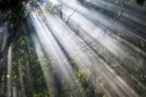 rays_of_light