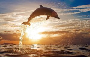 Dolphin-Jumping-HD-Wallpaper1