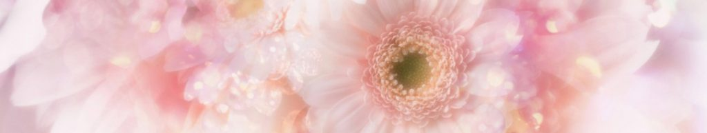 cropped-gerbera_daisies_flowers_8-wallpaper-1366x768