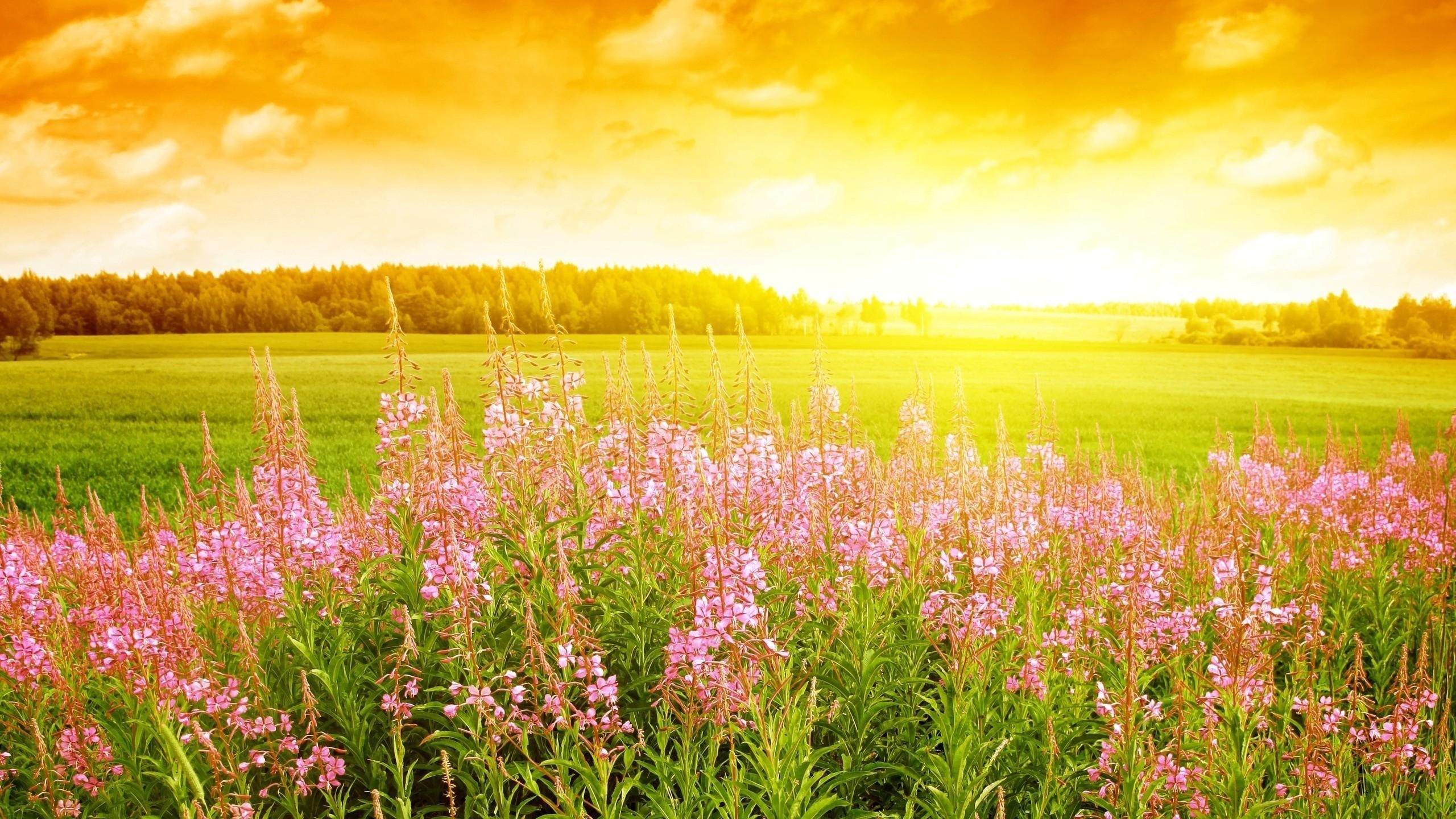 Fields of flower hd wallpaper for background vaststillness voltagebd Gallery