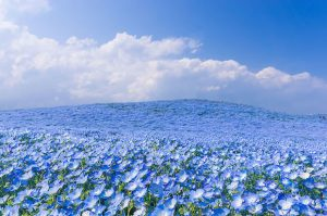flowering the feild