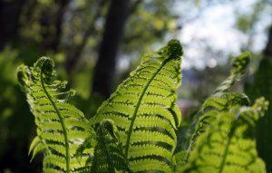 gree leaves