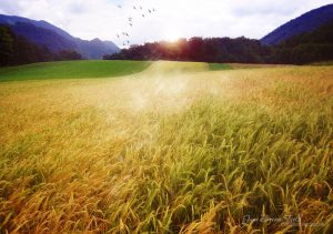 june_dream_field_by_love1008-d3itwzk