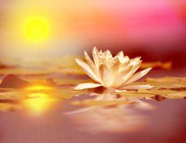 人類の目覚めのための瞑想的ポインティング ムージ
