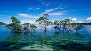 wallpaper-islands-india-web-nicobar-island-havelock-andaman-62002