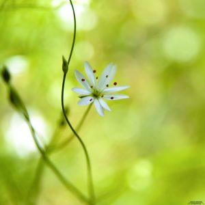 wild-flower-8-28-2012_ipad-2048x2048
